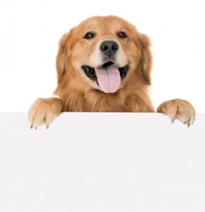 Dog Food Wet Vs Dry Pros Cons