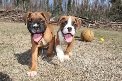 Dog Nutrition in Alliston, Ontario