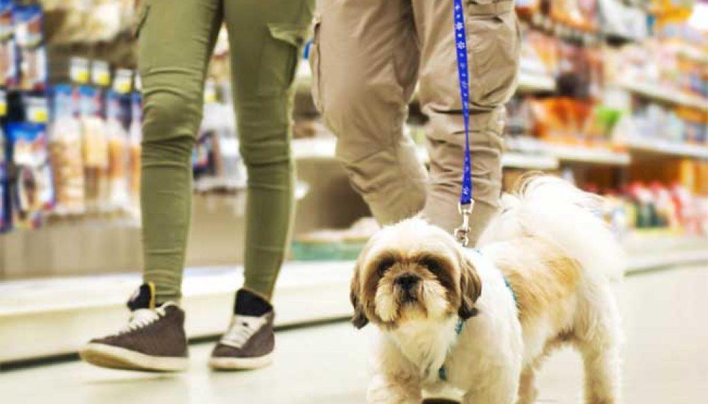 BUY DOG FOOD IN ALLISTON, ONTARIO