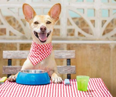 DOG NUTRITION IN BARRIE, ONTARIO