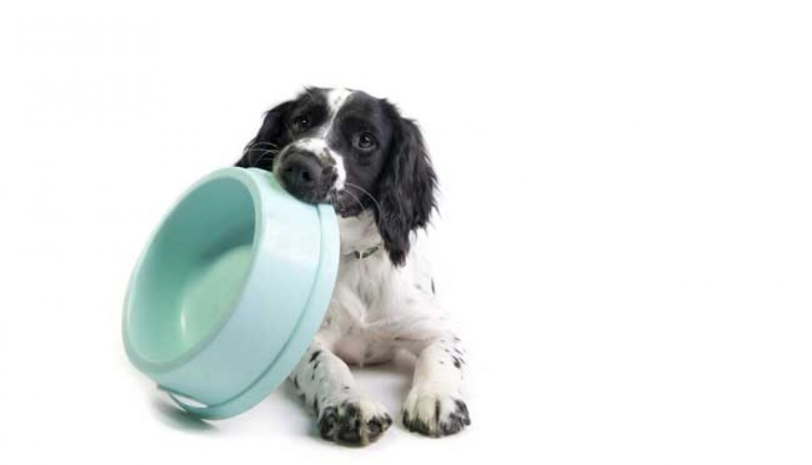 FROZEN DOG FOOD IN BARRIE, ONTARIO