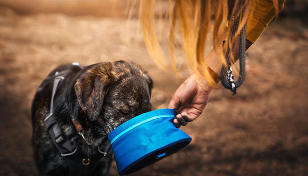 natural dog food for your beloved pet
