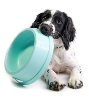 4 Benefits of Raw Dog Food