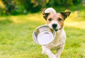 Three Benefits of Grain-Free Dog Food