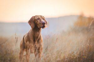 Three Benefits of Raw Dog Food